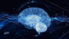 Brain illustration.